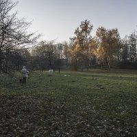 Осенние этюды :: Яков Реймер