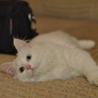 Моя новая кошка.Как назвать?:) :: Виталий Виницкий
