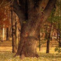 Осень :: Сергей Кондратович