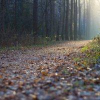 Осенний лес прекрасен :: Ирина A