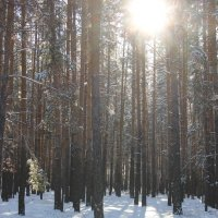 В лесу. :: Владимир Чуриков