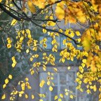 Осень в Москве :: Анастасия Смирнова