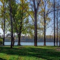 Краснодар, набережная реки Кубань, на др. стороны Солнечного острова, ноябрь 2015 :: Таня Харитонова