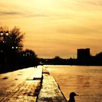 Астраханская чайка... :: Надежда