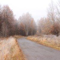 Дорога к храму.. :: Наталья Юсова (Natali50)