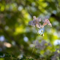Цветочек которому одиноко :: Александр Деревяшкин
