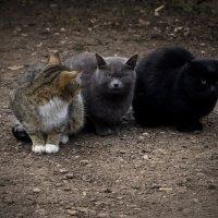 Три кота :: Евгений