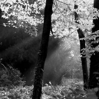 В потоках солнечного света :: Alexander Andronik