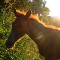 Солнечная лошадь :: Олег Романенко
