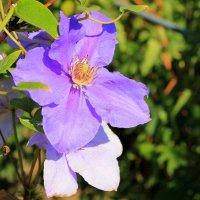 Король вьющихся растений. :: Валентина ツ ღ✿ღ
