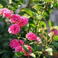 Средь связки роз, весной омытой, прекрасней чайной розы нет. :: Валентина ツ ღ✿ღ