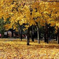 Золото кленовых листьев :: Татьяна Пальчикова