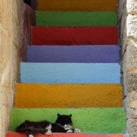 радужный кот :: Александр Иванов