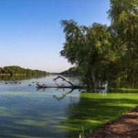 Осенним утром :: Denis Aksenov
