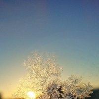 Новогодняя елка на окне.Готовимся к Новому году :: Лидия (naum.lidiya)