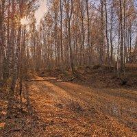 Лесной водоём :: Сергей Зыков