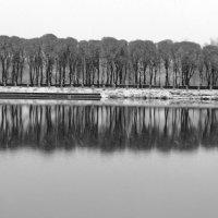 Монохромный ноябрь :: Полина Липина