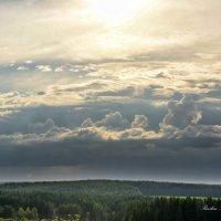 природа лес!! :: סּﮗRuslan HAIBIKE Sevastyanovסּﮗסּ
