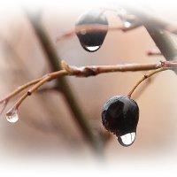 После утреннего дождя :: Tatiana Markova