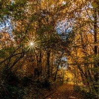 Осенний лес :: Александр Хорошилов