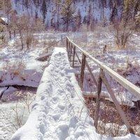 По белому снегу :: Анатолий Иргл