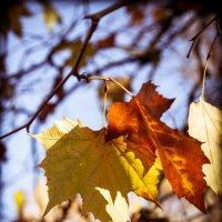 Последние листья :: Владимир Gorbunov