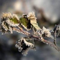 Про мороз :: Евгения Каравашкина