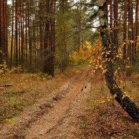 Загадка лесных дорог :: Александр Бойко