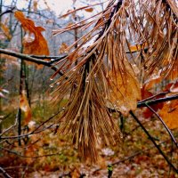 в мокром осеннем лесу :: Александр Прокудин