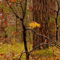 лес ноябрь дождь :: Александр Прокудин