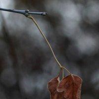 Одним словом - осень... :: Виктор Коршунов
