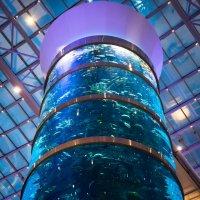 Москва. ТЦ АВИАПАРК,  колонна - аквариум :: Константин Фролов
