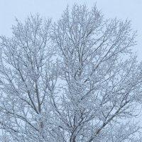 Утро, снег :: Ольга Цветкова