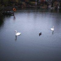 Утро на озере :: Олег