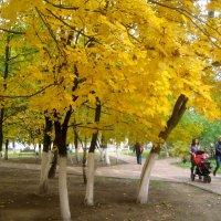 Это было золотой осенью :: Елена Семигина