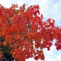 Багряная осень :: Алла Захарова