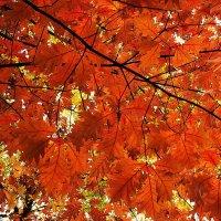Осень золотая  в гости к нам пришла..... :: Татьяна #****#