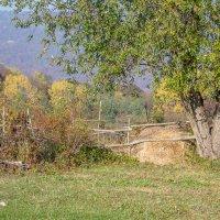Осень... :: Юлия Бабитко