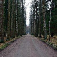 Дорога в жизнь#2 :: Sergey A.