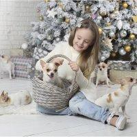 А мы хотим год собаки! :: Виктория Иванова