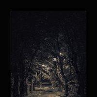 Улица.Ночь. :: shvlad