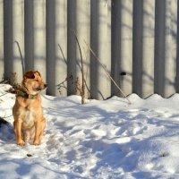 На границе... в зимний день :: Людмила Якимова