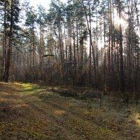 По осеннему лесу. :: Маргарита ( Марта ) Дрожжина