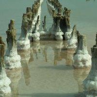 Соленое озеро :: Ekaterina Karbo