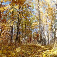 Осінь... Обожнюю, коли під ногами легко шурхотить багряне листя... :: Сергій Панченко