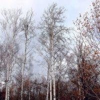 Прозрачная осень... :: Валерия  Полещикова
