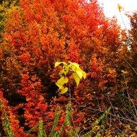 Железное дерево :: Светлана