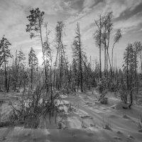 Зимняя югорская картинка :: Георгий Кулаковский