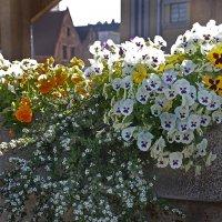 Бельгийские цветы :: Dmitry Swanson