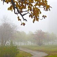спустился туман :: Елена